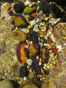 Steine im Wasser Foto-Anja Brinkmann