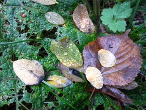 Tropfen-Blätter-Natur-Anja Brinkmann