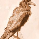 The crow-Zeichnung-Anja Brinkmann